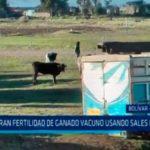 Mejoran fertilidad de ganado vacuno usando sales minerales