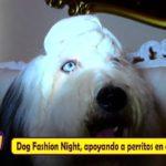 Dog Fashion Night, Trujillanos apoyando a perritos en abandono
