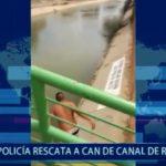 Piura: Policía rescata a perro de canal
