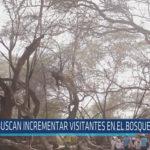 Chiclayo: Buscan incrementar visitantes en el bosque de pómac