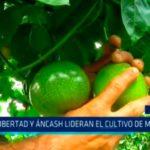 La Libertad y Áncash lideran el cultivo de maracuyá
