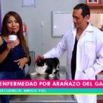 Amigo Fiel: Enfermedad por arañazo del gato