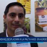 La Libertad: Arándano desplazará a la palta hass en agroexportación
