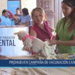 Chiclayo: Promueven campaña de vacunación canina