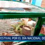Chimbote: Festival por el Día Nacional del Cuy