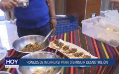 Chiclayo: Hongos de Incahuasi para disminuir desnutrición