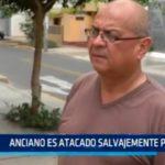 Anciano es atacado salvajemente por perro