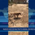 Chiclayo: Nuevo caso de maltrato animal en Mochumí