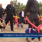 Chiclayo: Pintoresco concurso canino por Halloween