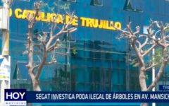 SEGAT investiga poda ilegal de árboles en Av. Mansiche