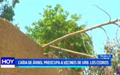 Trujillo: Caída de árbol preocupa a vecinos de Los Cedros