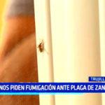 Vecinos piden fumigación ante plaga de zancudos