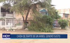 Chiclayo: caída de parte de un árbol generó susto