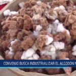 Chiclayo: Convenio busca industrializar el algodón nativo