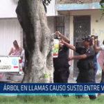 Chiclayo: Árbol en llamas causo susto entre vecinos