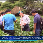 Chiclayo: Capacitan a algodoneros para manejo de plagas