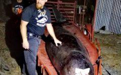 Filipinas: Una ballena murió luego de comer 40 kilos de basura