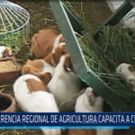 Chiclayo: Gerencia regional de agricultura capacita a cuyicultores