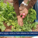 Chiclayo: Impulsaran agricultura urbana en comedores populares