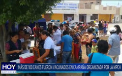 Chiclayo: Más de 100 canes fueron vacunados en campaña organizada por la MPCH