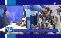 Chiclayo: Ordenanza Municipal que regule la protección animal