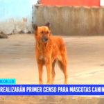 Trujillo: realizarán primer censo para mascotas caninas