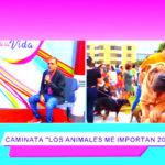 Caminata: los animales me importan 2019