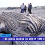 Chiclayo: Enterrarán a ballena varada en playa de San José