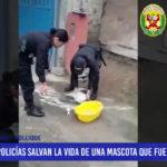 Lima: Policías salvan la vida de una mascota que fue envenenada
