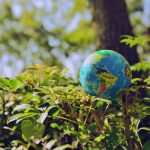 Cinco detalles que quizás no sabías de la educación ambiental